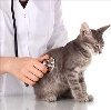 Ветеринарные клиники в Холмске